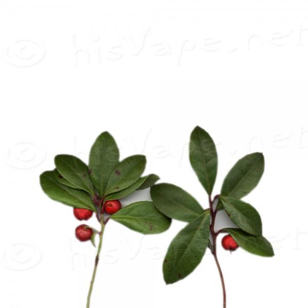 Wintergreen Aroma